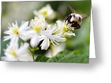 Bumble Bee On Clematis Greeting Card