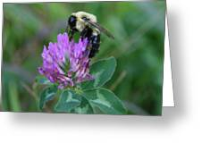 Bumble Bee On Red Clover  Greeting Card