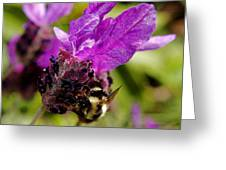Bumble Bee Pollinating Greeting Card