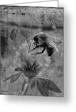 Bumble Bee Post Card 2 Bw Greeting Card