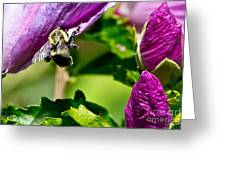 Bumble Bee Vii Greeting Card