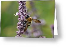 Bumble On Sage Greeting Card