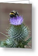 Bumble Thistle Greeting Card