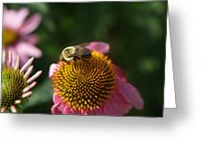 bumblebee and Echinacea Greeting Card