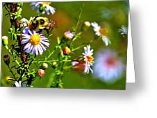 Bumblebee Delight Greeting Card
