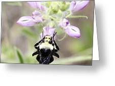 Bumblebee Heaven Greeting Card