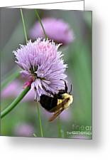 Bumblebee On Clover Greeting Card