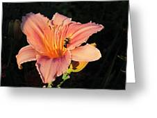Bumblebee On Daylily Greeting Card