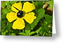 Bumblebee On Flower Greeting Card