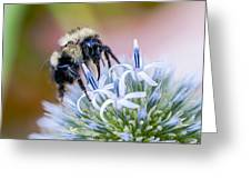 Bumblebee On Thistle Blossom Greeting Card
