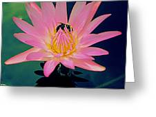Bumblebee On Water Lily Greeting Card