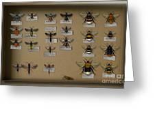 Bumblebees - Wild Bees - Wesps - Yellow Jackets - Ichneumon Flies - Apiformes Vespulas Hymenopteras  Greeting Card