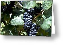 Bunch Of Grapes Greeting Card by Heiko Koehrer-Wagner