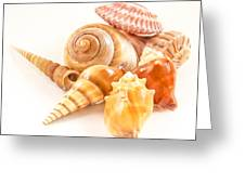 Bunch Of Shells Greeting Card