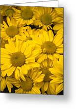 Bunch Of Yellow Daisies Greeting Card