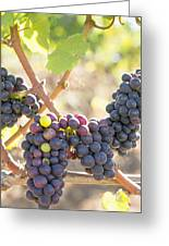 Bunches Of Red Wine Grapes Hanging On Grapevine Greeting Card