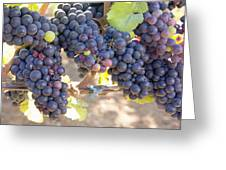 Bunches Of Red Wine Grapes Greeting Card