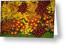 Bunches Of Yellow Copper Orange Red Maroon - Hot Autumn Abundance Greeting Card