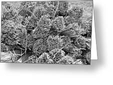 Bundled Dried Grass Greeting Card