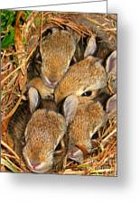 Bunny Babies Greeting Card