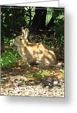 Bunny In The Wild 2 Greeting Card