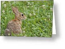 Bunny Rabbit In The Clover Greeting Card