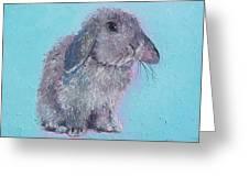 Bunny Rabbit Greeting Card