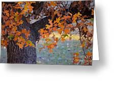 Bur Oak Tree In Autumn Greeting Card