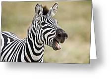 Burchells Zebra Equus Quagga Burchellii Greeting Card