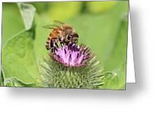 Burdock And Honeybee Greeting Card