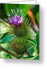 Burdock Greeting Card