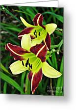 Burgundy And Yellow Lilies 2 Greeting Card