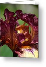Burgundy Blossom Greeting Card