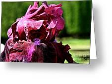 Burgundy Breeze Greeting Card