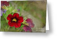 Burgundy Calibrochoa Blank Greeting Card Greeting Card