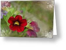 Burgundy Calibrochoa Blank Greeting Card II Greeting Card