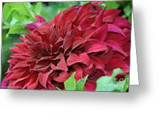 Burgundy Dahlia Greeting Card