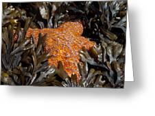 Buried In Kelp Greeting Card by Sarah Crites