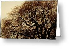 Burlington Willow Greeting Card