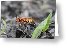 Burn Pile Bee Greeting Card