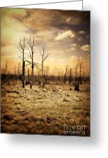 Burned Out Forest Greeting Card