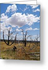 Burned Trees On Colorado Plateau Greeting Card