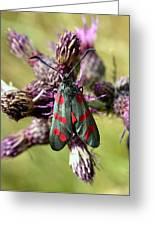 Burnett Moth Greeting Card