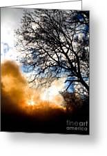 Burning Olive Tree Cuttings Greeting Card