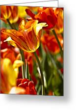 Tulips-flowers-tulips Burning Greeting Card