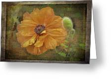 Burnished Poppy Greeting Card