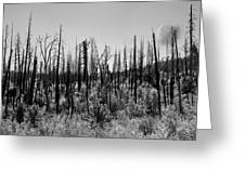 Burnt Moonscape Greeting Card