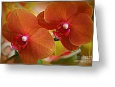 Burnt Orange Orchids Greeting Card
