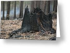 Burnt Tree Trunk Greeting Card