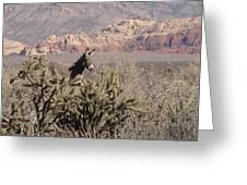 Burro Red Rock Greeting Card